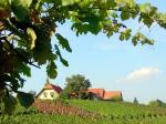 Weinbau Dietrich