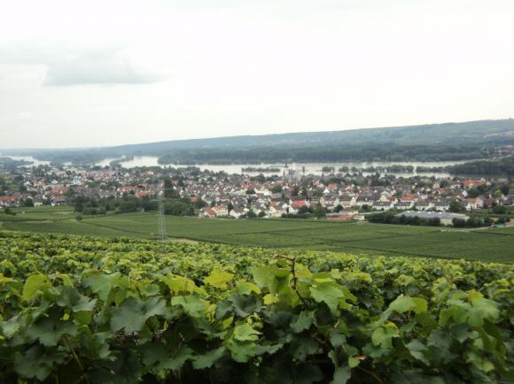 Pension Allendorf Oestrich-Winkel  im  Rheingau